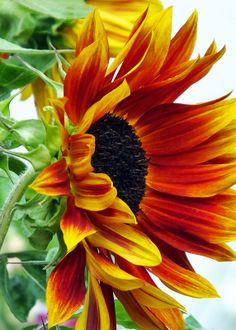 Gardening Hacks That Anyone Can Use Sunflower Garden, Sunflower Art, Watercolor Sunflower, Sunflower Tattoos, Yellow Sunflower, Yellow Flowers, Watercolor Flowers, Sunflower Paintings, Purple Dahlia