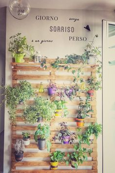 #verdeverticale il mio #angoloverde #pianteefiori #homesweethome #riciclocreativo #palletprojects #palletideas #palletwall #palletdecor #palletprojects #verdeincittà #workinprogress by #pavisistem Pallet, Plants, Green, Wood Pallets, Planters, Pallets, Plant, Sump