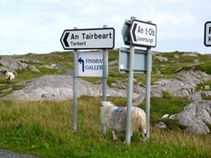 Isle of Harris. As soon as you get to the Highlands, the sheep have the right-of-way and are always in the road!
