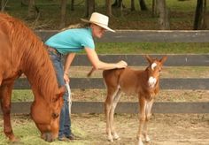Vital Lessons for Young Horses