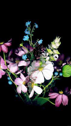 nice wallpaper-apple-ios8-iphone6-small-dark-flower-iphone6-plus-wallpaper