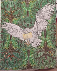 We love this colouring in of Hedwig!