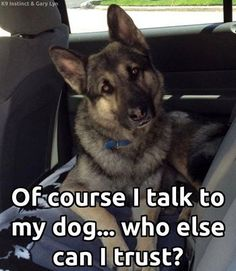 Of course I talk to my animal companions..who else can I trust with my secrets? #dogs