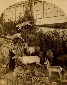 vintage taxidermy - Philadelphia Centennial International Exposition 1876 - Found on etsy.com