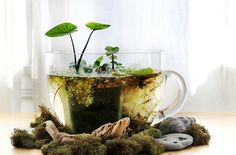 Tabletop water garden. A tiny little tea cup pond. How sweet! I love this idea! Maybe for the livingroom once I get the coffee table in.