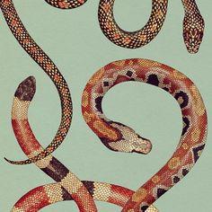 ~ Katie Scott - Blood Python and friends