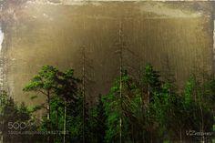 Forest by v_znakomov. @go4fotos