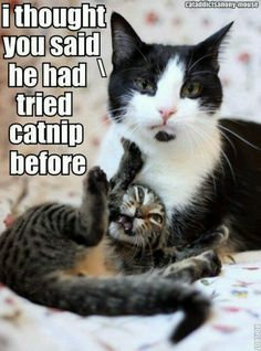 I thought you said he had tried catnip before.