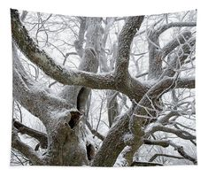 Old Trees Tattoo Trees Old trees tattoo - alte bäume tattoo - tatouage de vieux arbre Old Trees, Tree Branches, Landscaping Around Trees, Tree Quotes, Tree Sketches, Christmas Tree Painting, Tree Illustration, Tree Trunks, Tree Photography