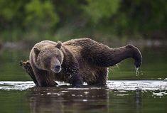 Just the bear nesecities, the simple bear nesecities.