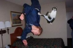 I don't know what is going on here but this cat looks exactly like mine.