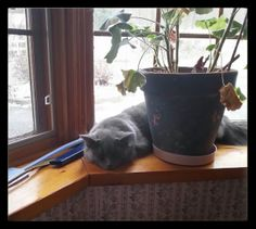 """Dust Bunny's new spot....awww....""""Dust Bunny"""" as a name for a gray cat....I <3 that! =^.~="""