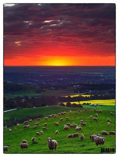 Sunset over Lyndoch, Barossa Valley, South Australia Beautiful World, Beautiful Places, Beautiful Pictures, Great Barrier Reef, Australia Occidental, Adelaide South Australia, Brisbane, Surfer, Australia Travel