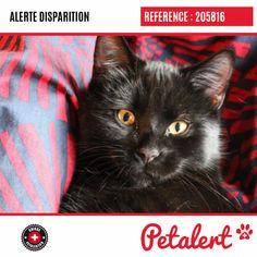 Cette Alerte (205816) est désormais close : elle n'est donc plus visible sur la plate-forme Petalert Suisse. L'émetteur de cette Alerte ne s'est plus manifesté, malgré nos relances. Merci pour votre aide. Visible, Aide, Cats, Switzerland, Thanks, Shape, Animaux, Gatos, Cat