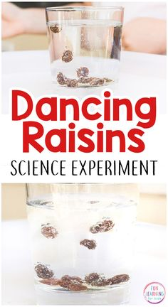 This simple dancing raisins science experiment is super simple and so much fun! It comes with free printable science recording sheets too! - Kids education and learning acts Science Week, Kid Science, Preschool Science, Science Classroom, Science Fair, Science Lessons, Science Activities, Science Projects, Stem Science