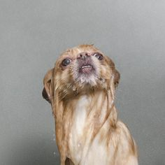 Wet Dog - Sophie Gamand