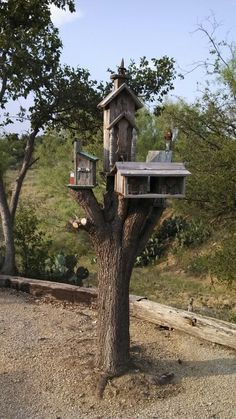 This was a tree stump that my sister did not know what to do with. Decorated with bird houses it makes an interesting yard display.