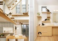 Pet Purrrfect:                                                 The Ultimate Cat-Friendly Interior Design
