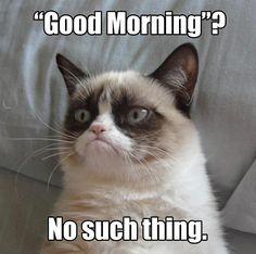 How I feel every morning.