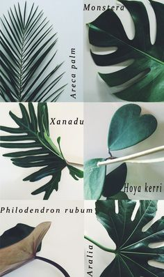 House Plants | Foliage Ideas for the Home and some great inspiration for a botanicals home decor theme.