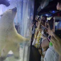 Após polêmica, 'urso mais triste do mundo' é retirado temporariamente de shopping chinês