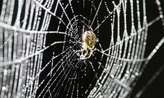 The structure of spider webs