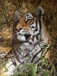 Tony Karpinski, oil painting, tiger. tonykarpinski.net