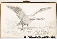 Kansallisgalleria - Taidekokoelmat - Luonnoskirja Bird, Animals, Museum, Animales, Animaux, Birds, Animal, Animais