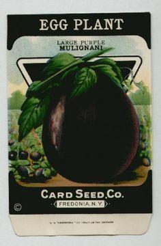 Antique Card Seed Company   Eggplant