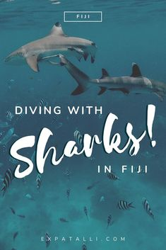 Is diving with the sharks in Fiji safe? Is it ethical? What companies offer the experience, and what do they contribute to marine conservation? Here's what you need to know about shark diving in Fiji. Shark Diving, Reef Shark, Shark Swimming, Scuba Diving Gear, Cave Diving, Sharks, Fiji Culture, Fly To Fiji, Shark Conservation