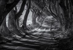 The Dark Hedges px - This is a mono conversion of a previous upload. The conversion was made using Silver Efex Pro 2.