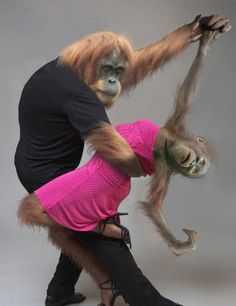 Maybe this is their monkeys?? Who knows???? Mp