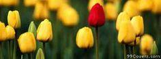 red tulip single Facebook Cover