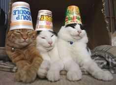 Cup O Soup Cats (and 19 other photos that will make you smile!!!)