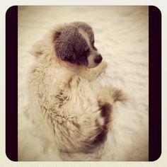 Roy! The Ordinary, Arctic, Finland, Safari, Husky, Meet, Dogs, Travel, Animals