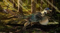 A reconstruction shows what the newly discovered winged and feathered dinosaur Zhenyuanlong suni might have looked like. It lived in what is now China during the Early Cretaceous period, about 125 million years ago.