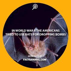 bats-world-war-2