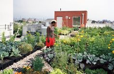 NYC's Design Trust for Public Space Launches Urban Agriculture Data Collection Portal