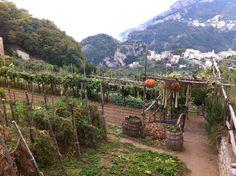 Fabulous location for Villa Maria's Organic Vegetable Garden: Ravello, Italy.