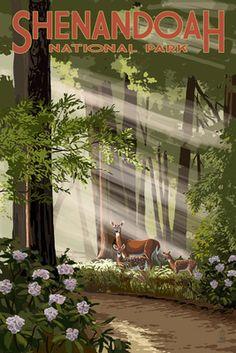 Shenandoah National Park, Virginia - Deer & Fawns - Lantern Press Poster National Park Posters, Us National Parks, Voyage Usa, Best Places To Camp, Kunst Poster, Lourdes, Shenandoah National Park, Park Art, Stock Art