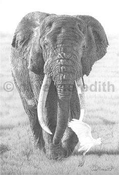Clive Meredith Wildlife Art: DSWF wildlife artist of the year 2013