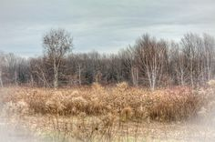 Lake Erie Bluffs - view of meadow to the south
