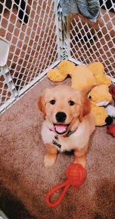 Baby Puppies, Baby Dogs, Cute Puppies, Cute Dogs, Dogs And Puppies, Doggies, Cute Funny Animals, Cute Baby Animals, Animals And Pets