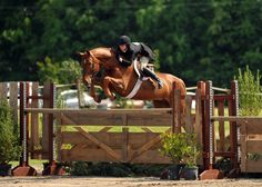 Brunello and Liza Boyd, I totally want to do a hunter derby one day! They look like a blast
