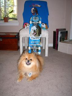 My #BlogPawsChat pal @PepperPom Come Follow us here