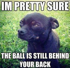 LOL! #Funny #Dog #meme