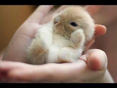 baby bunnies - Pesquisa Google