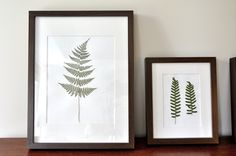 BirdHouse: How to make your own botanical prints