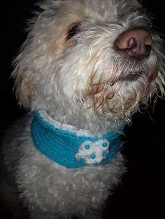 Dog Clothes Dog Bandana  Dog Scarf by RainbowPetShop on Etsy https://www.etsy.com/listing/218499807/dog-clothes-dog-bandana-dog-scarf?ref=shop_home_active_1