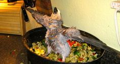 Chop For Parrots Is A Healthy Method Of Feeding Your Pet Bird That Makes Life A Lot Easier. Feed healthy by adding variety!